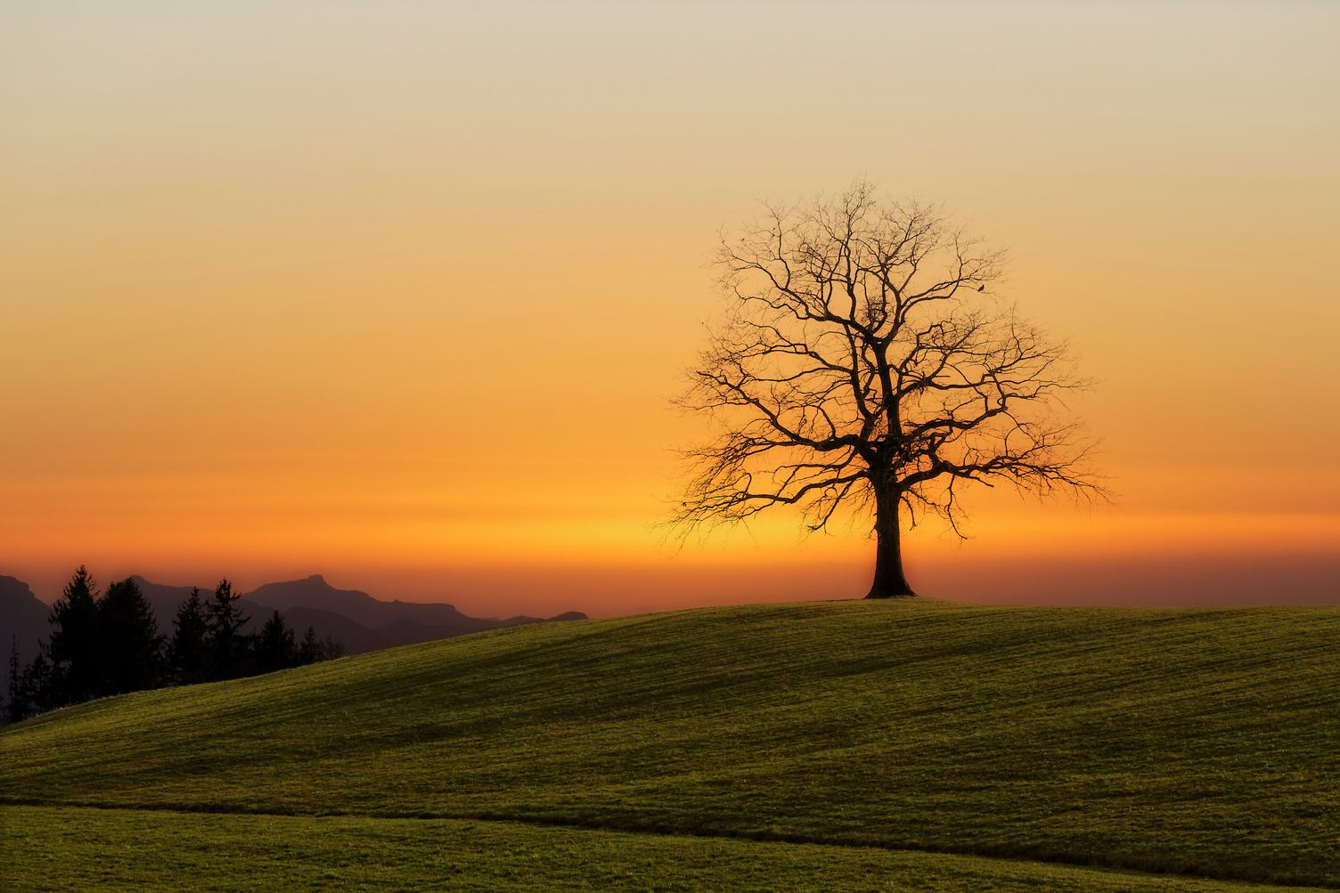 Landscape with Silhouette of Solitaire Tree on Horizon at Sunset