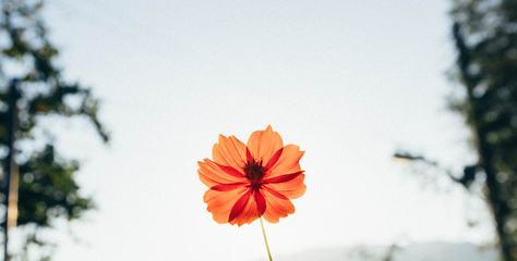 Orange Flower with Translucent Petals