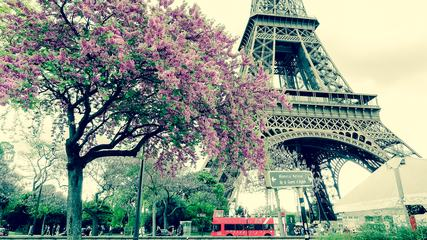 Eiffel Tower and Flowering Tree, Paris