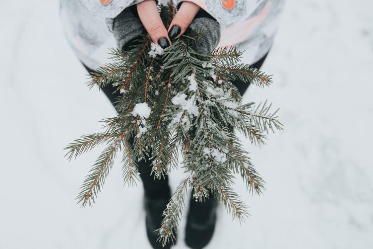 Spruce Brunch in Female Hands During Winter