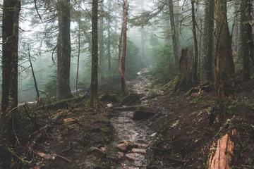 Mountain Stream in the Dark, Wet Hazy Forest