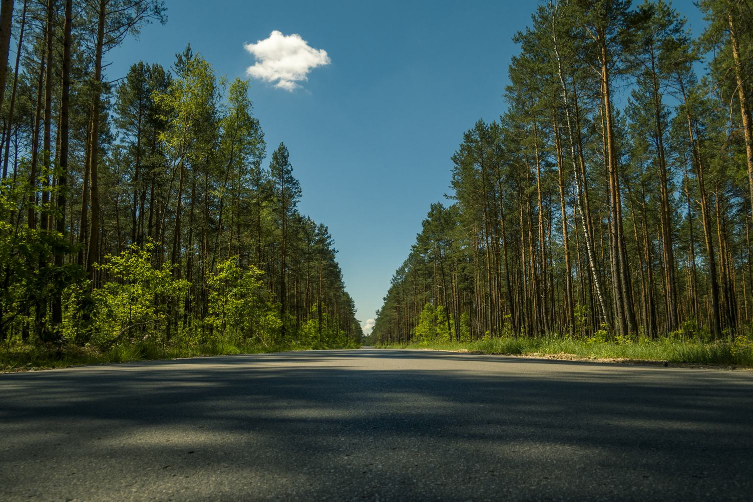 Straight Asphalt Road in the Forest