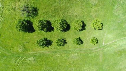 Top View of Trees, Natural Grass Texture