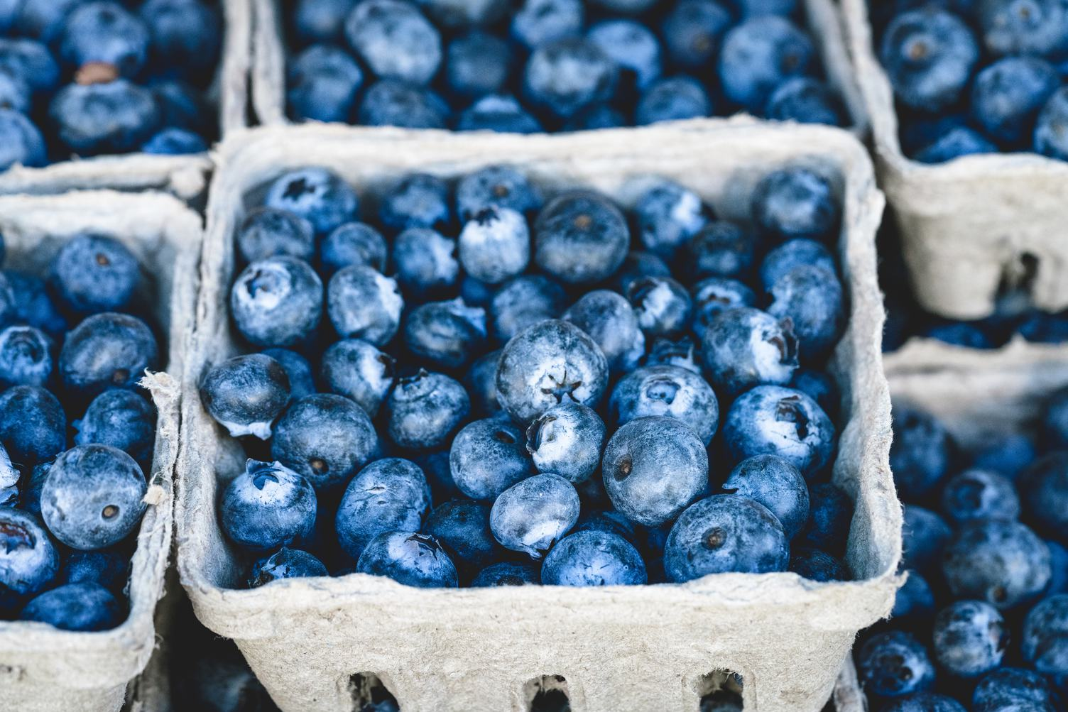 Blueberries in Carton Boxes