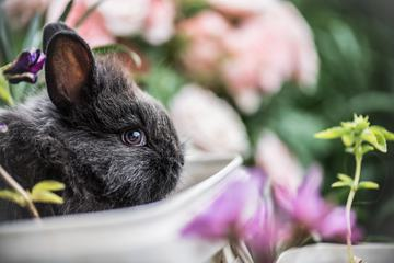 Little Fluffy Baby Bunny