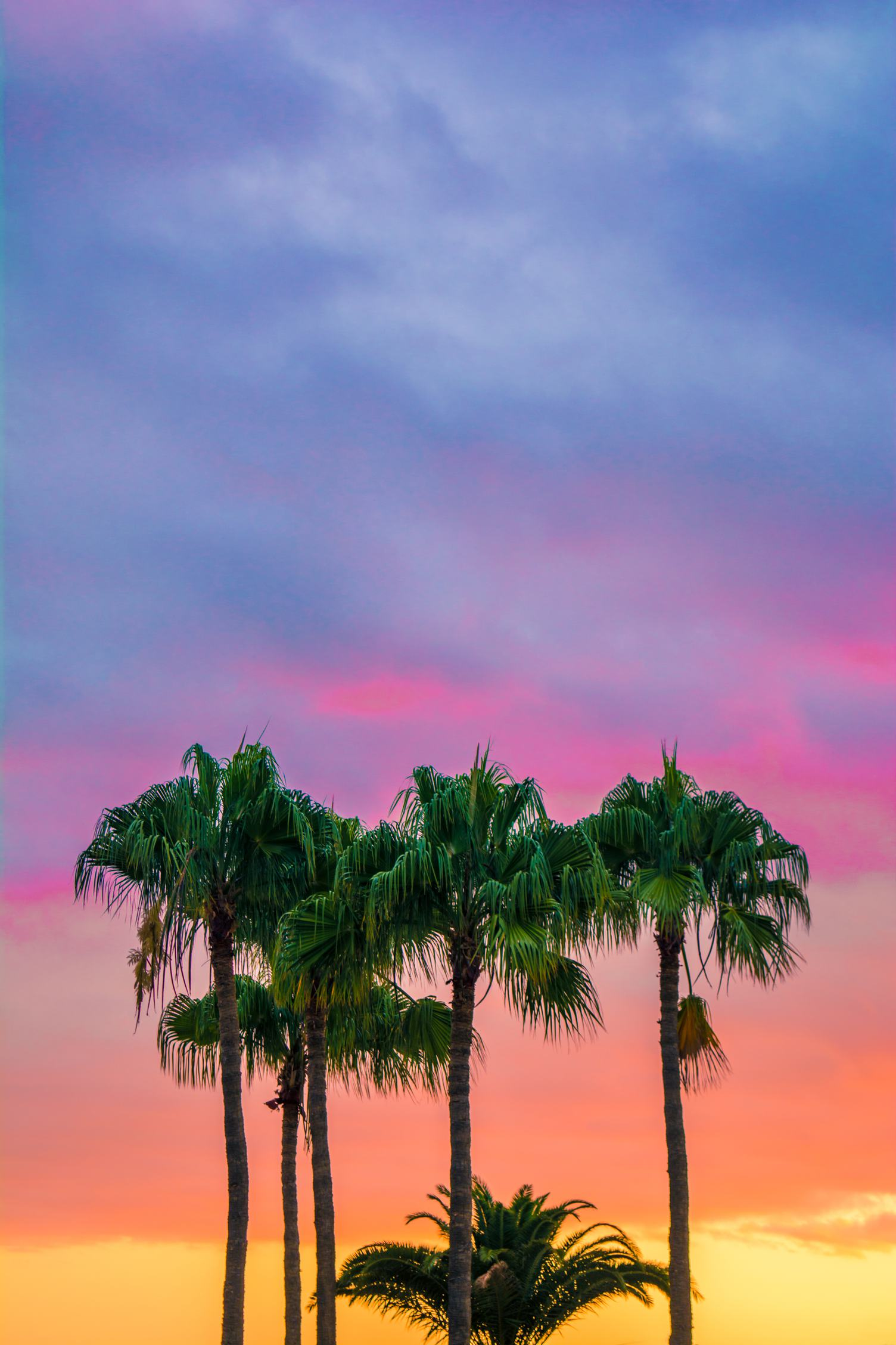 Palm Trees against Colorfull Sky