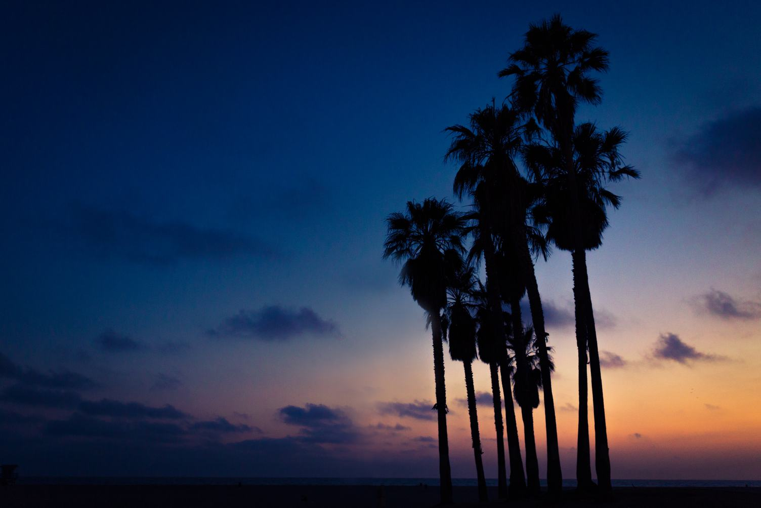 Palm Trees at Sunset against Navy Blue Sky
