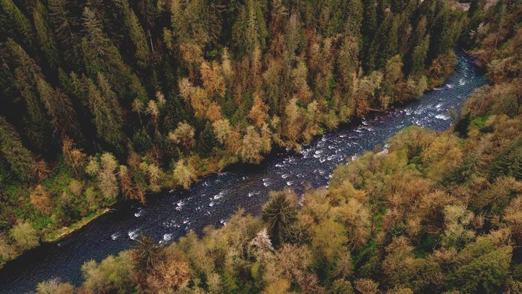 Aerial View of Mountain River and Forest