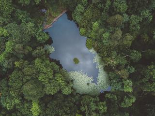 Top View of Lake in the Forest