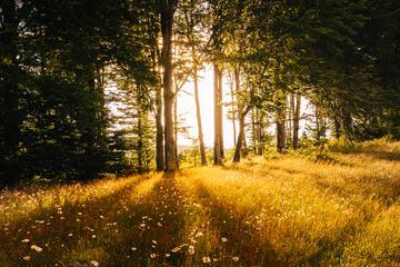 Sunlight Passing Between Trees