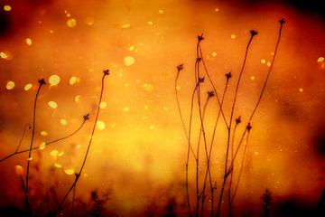 Plants on Orange Abstract Background