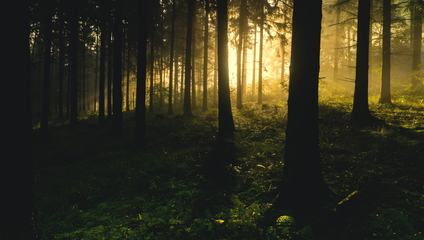 Sunlight in the Dark Forest