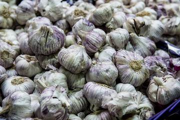 Lots of Garlic Bulbs