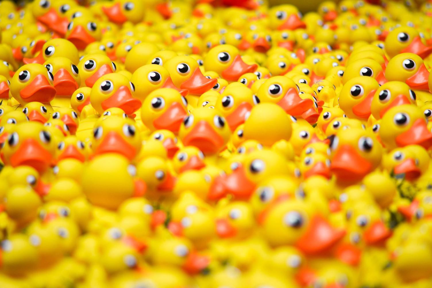 Plenty of Yellow Rubber Ducks