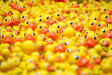Plenty of Yellow Rubber Ducks