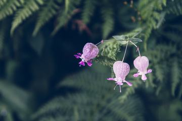 Pink Flowers Growing among Ferns