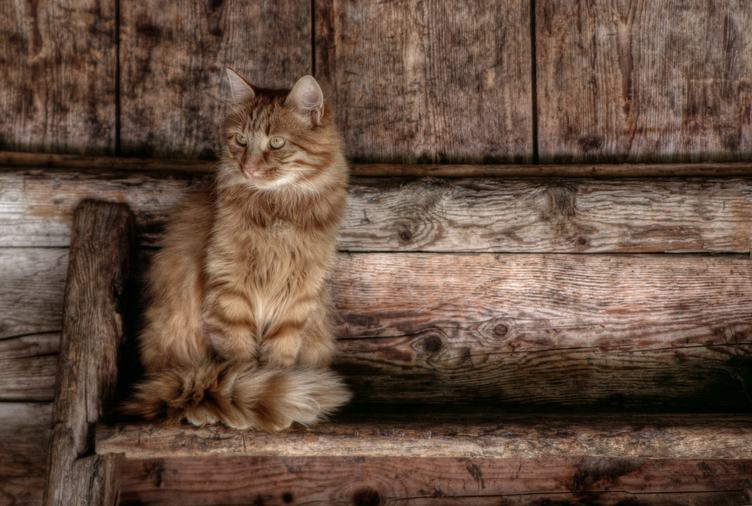 Cat Sits on Old Wooden Bench