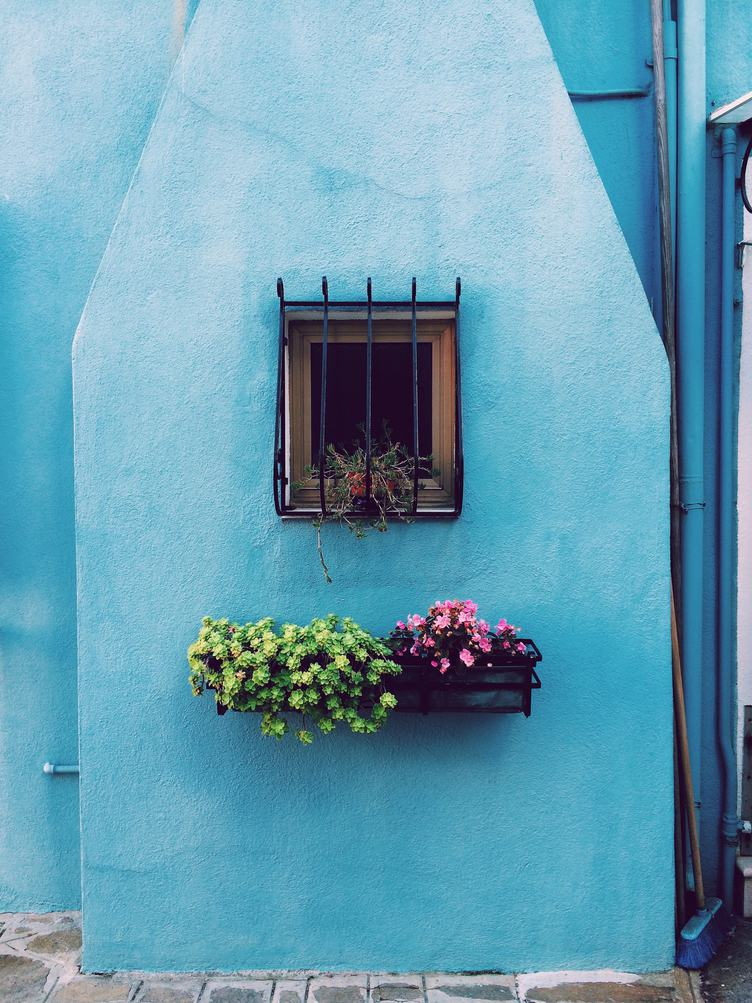 Window Flower Box with Blooming Flowers against Blue Wall