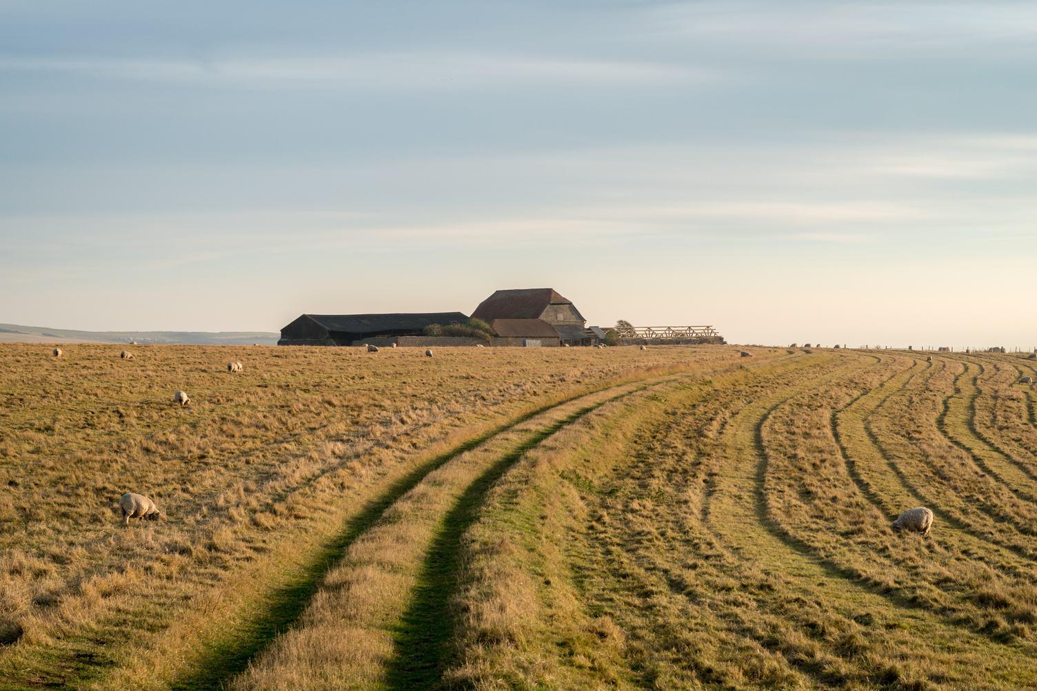 A Farm amid Sheep Pasture