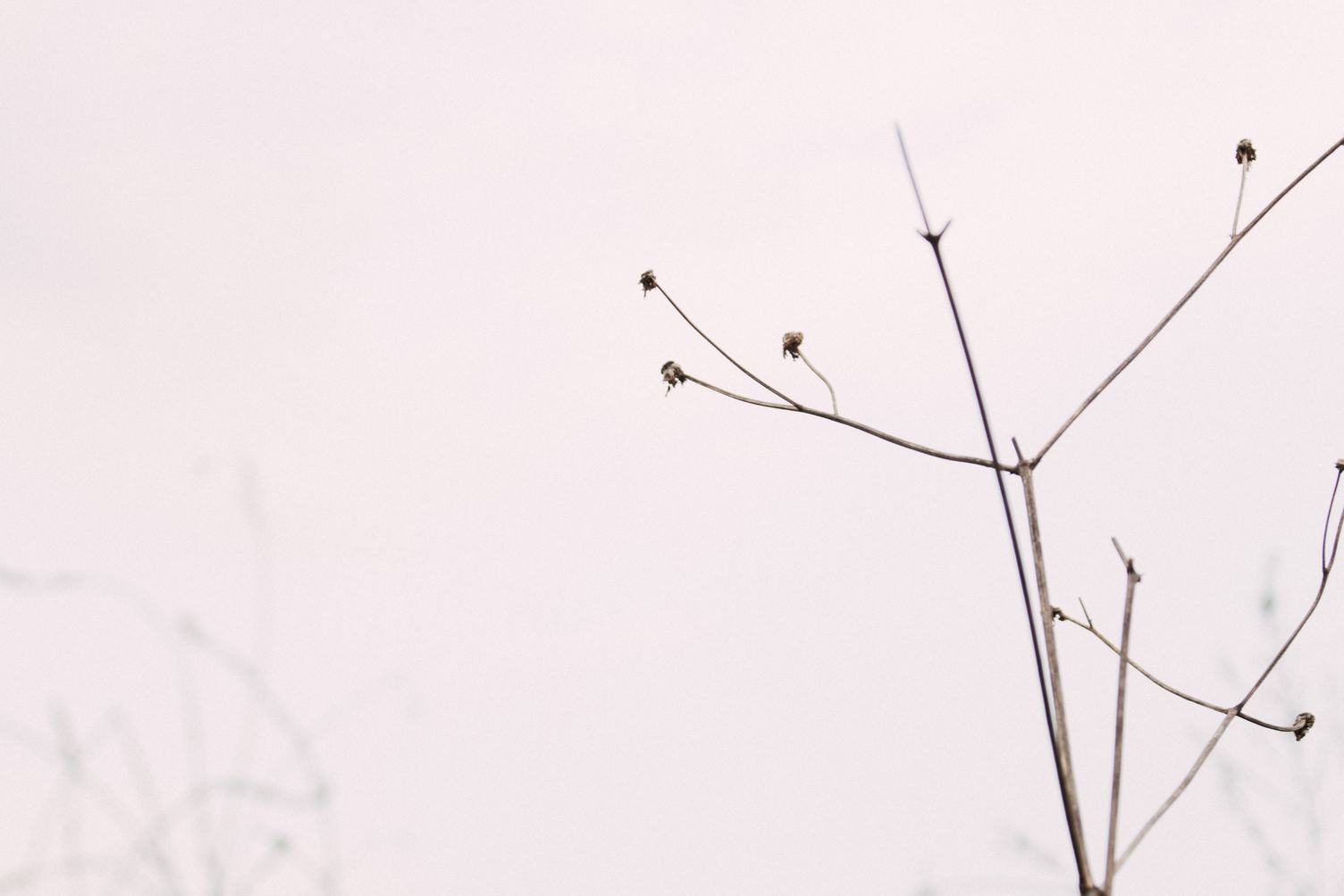 Branch of Dried Plant on Light Pink Background