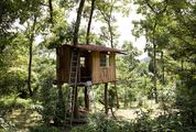 Bamboo House on a Tree