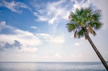 Palm Tree and the Ocean