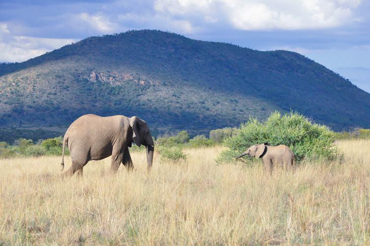 Elephant Family in Pilanesberg National Park, South Africa
