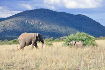 Elephant Family in Pilanesberg National Park, South Africa