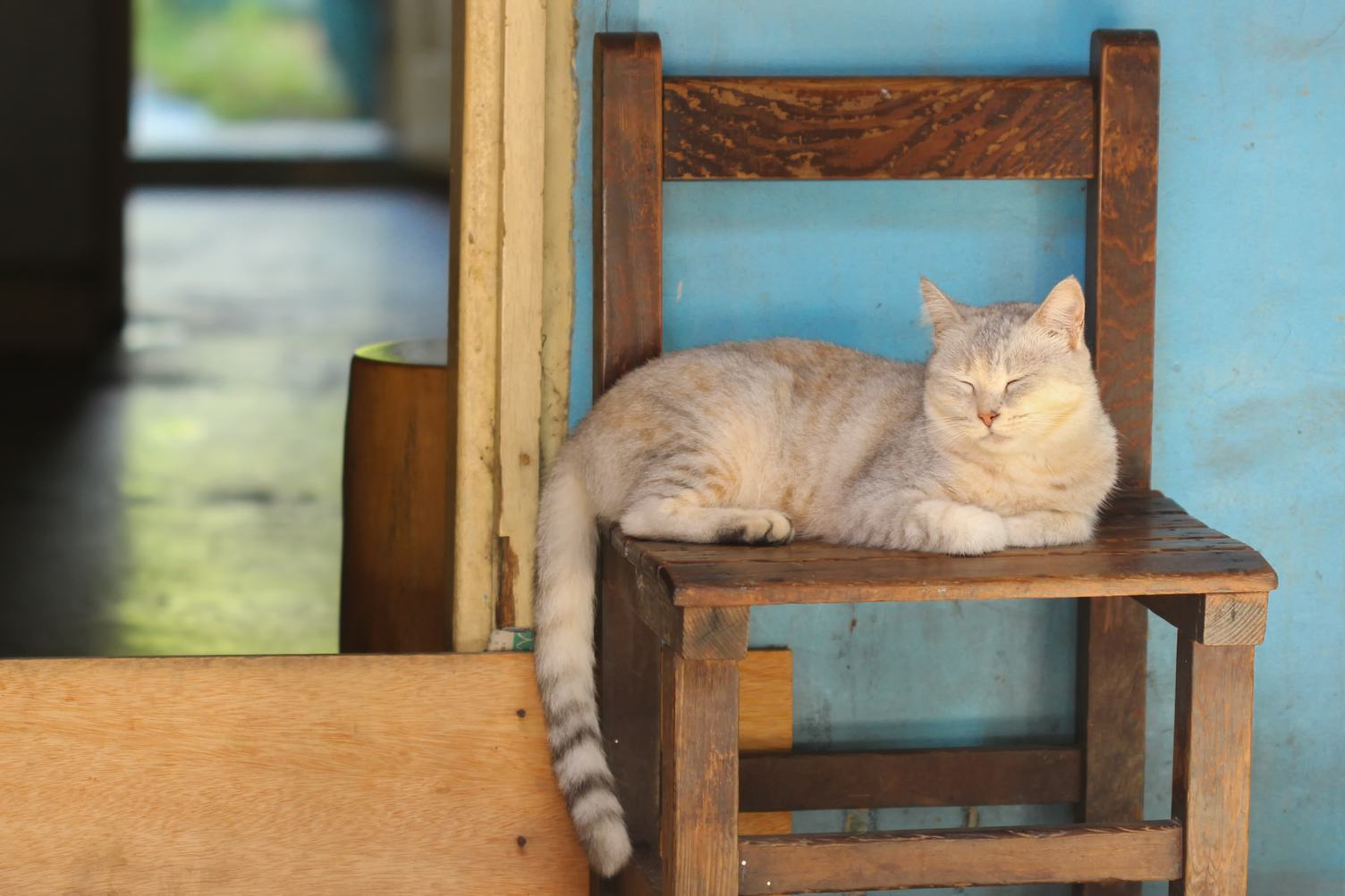 Cat Laying on a Chair Outdoors