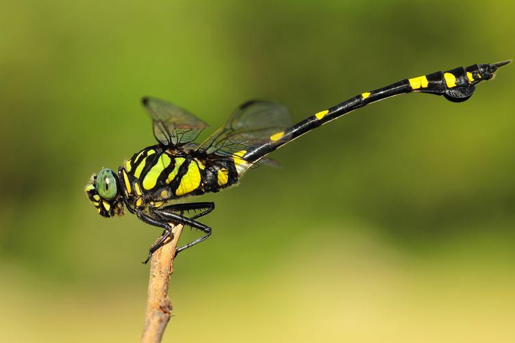 Dragonfly Resting on a Twig