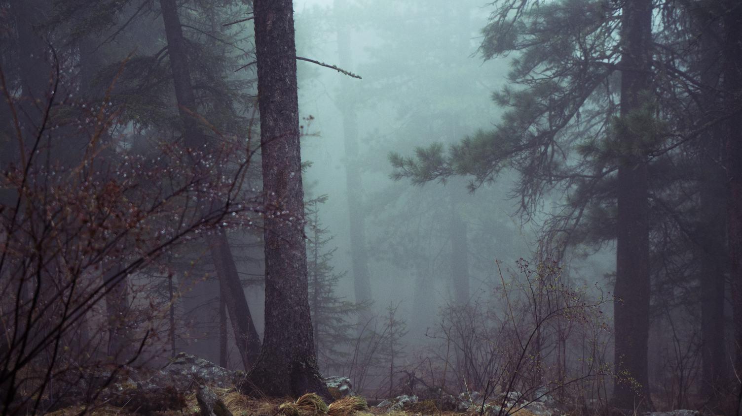 Dark Foggy Forest