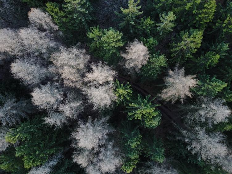 Forest Top View