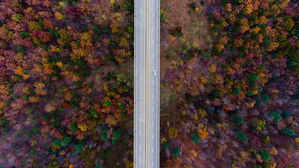 Road in the Middle of Autumn Forest Aerial View