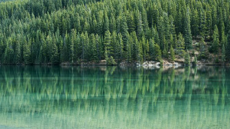 Coniferous Forest and Lake Mirror Reflection