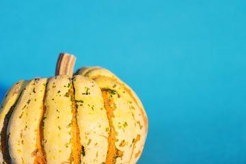 Single Pumpkin against Blue Wall