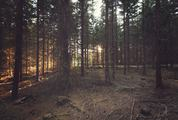 Swedish Coniferous Forest