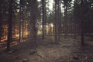 Swedish Coniferous Forest