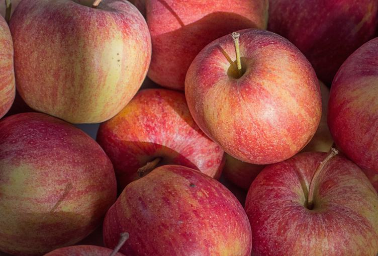 Red Apples Fresh and Healthy