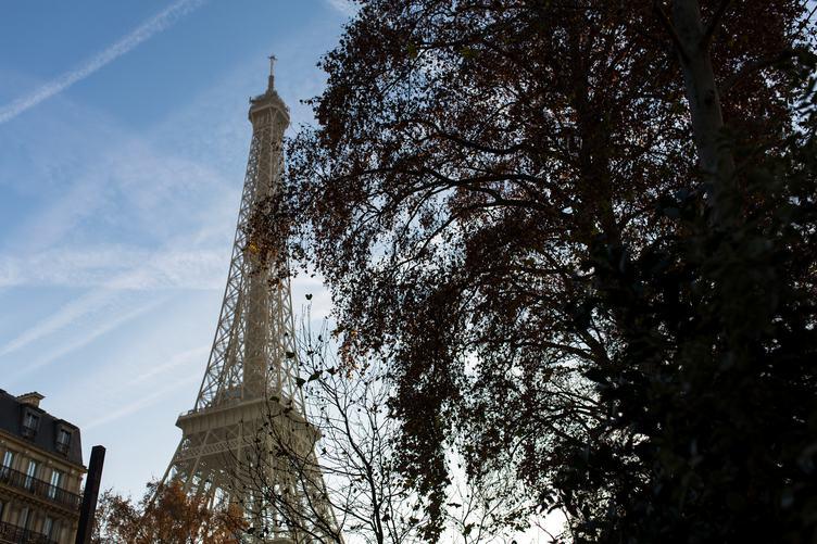 Eiffel Tower behind a Tree, Paris France