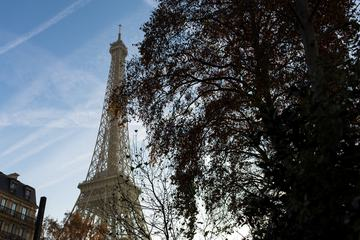 Eiffel Tower behind a Tree, Paris France