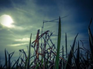 Grass against a Dusk Sky at Sunset