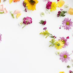 Different Flowers Scattered on a White Background