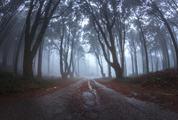 Wet Asphalt Road through the Forest