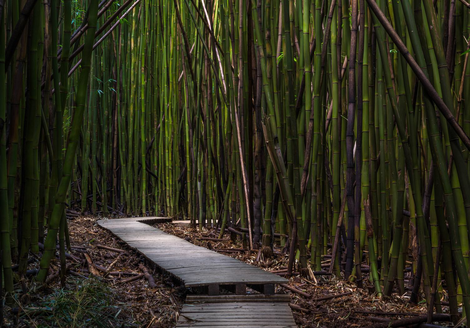 Wooden Path through Bamboo Forest