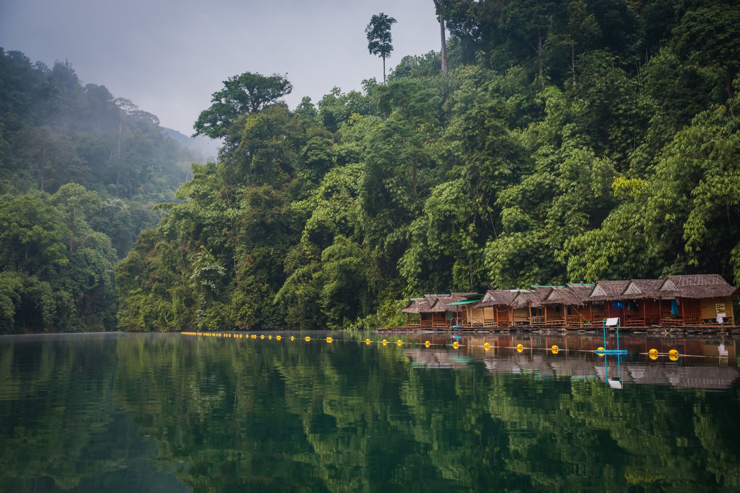 Forest in Khao Sok National Park