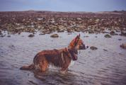 Wet Dog Standing in the Water