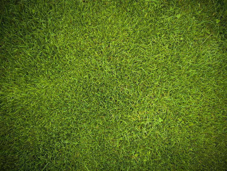 Green Lawn Surface