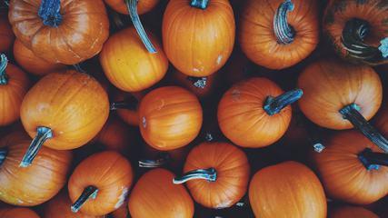 Autumn Vegetables - Pumpkins