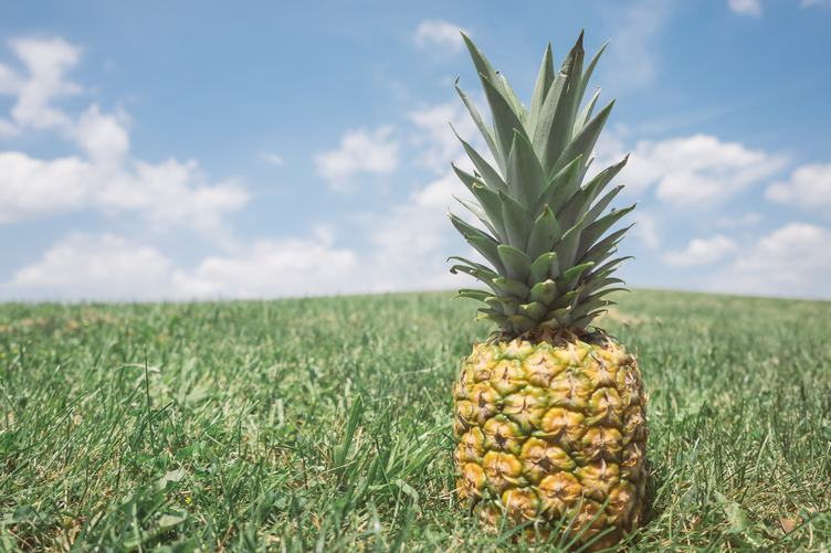 Pineapple on the Grass
