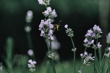 Closeup of Meadow with Wild Flowers and Bee